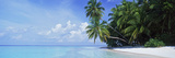 Palm Trees on the Beach, Fihalhohi Island, Maldives Photographic Print by  Panoramic Images
