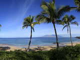 Palm Trees on the Beach, Maui, Hawaii, USA Photographic Print by  Panoramic Images