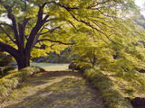 Trees in a Garden, Rikugien Garden, Tokyo Prefecture, Japan Photographic Print by  Panoramic Images