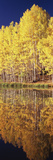 Reflection of Aspen Trees in a Lake, Telluride, San Miguel County, Colorado, USA Photographic Print by  Panoramic Images
