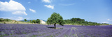 Lavender Field Provence France Photographic Print by  Panoramic Images