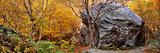 Big Boulder in a Forest, Stowe, Lamoille County, Vermont, USA Photographic Print by  Panoramic Images