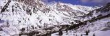 Trees on a Ski Resort, Snowbird Ski Resort, Utah, USA Photographic Print by  Panoramic Images