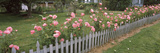 Pink Rose in a Garden, Whidbey Island, Island County, Washington State, USA Photographic Print by  Panoramic Images