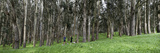 Two People Jogging in a Park, the Presidio, San Francisco, California, USA Fotografisk trykk av Panoramic Images,