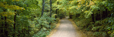 Dirt Road Passing Through a Forest, North Woods Upper Peninsula, Michigan, USA Photographic Print by  Panoramic Images