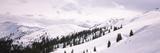 Trees at a Ski Resort, Kitzbuhel Alps, Wildschonau, Kufstein, Tyrol, Austria Photographic Print by  Panoramic Images
