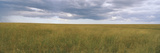 Clouds over a Landscape, Masai Mara National Reserve, Kenya Photographic Print by  Panoramic Images