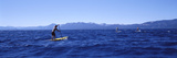 Tourists Paddle Boarding in a Lake, Lake Tahoe, California, USA Photographic Print by  Panoramic Images