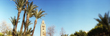 Koutoubia Mosque and Palm Tree in Marrakesh, Morocco Photographic Print by  Panoramic Images