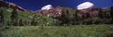 Forest, Crested Butte, Gunnison County, Colorado, USA Photographic Print by  Panoramic Images