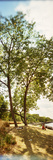 Trees in a Park, Staten Island, New York City, New York State, USA Photographic Print by  Panoramic Images