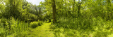 Trees in a Forest, Upton Broad and Marshes, Norfolk, England Photographic Print by  Panoramic Images