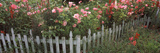Pink Rose and Snapdragon Flowers in a Garden, Whidbey Island, Island County, Washington State, USA Photographic Print by  Panoramic Images