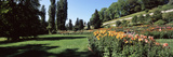 Flowers in a Garden, Mainau Island, Lake Constance, Baden-Wurttemberg, Germany Photographic Print by  Panoramic Images