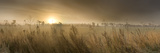 Reeds in a Field at Sunset, Thetford, Breckland, Norfolk, England Photographic Print by  Panoramic Images