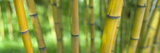 Close-Up of Bamboo, California, USA Photographic Print by  Panoramic Images