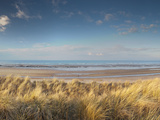 Grass on the Beach, Holme Dunes, Norfolk, England Photographic Print by  Panoramic Images