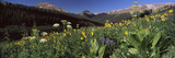 Wildflowers in a Forest, West Maroon Pass, Crested Butte, Gunnison County, Colorado, USA Photographic Print by  Panoramic Images