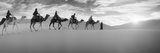 Tourists Riding Camels Through the Sahara Desert Landscape Led by a Berber Man, Morocco Fotografie-Druck von  Panoramic Images