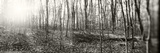Forest, Pocono Mountains, Pennsylvania, USA Photographic Print by  Panoramic Images