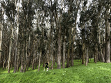Woman Jogging in a Park, the Presidio, San Francisco, California, USA Photographic Print by  Panoramic Images