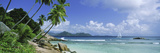 Palm Trees on the Beach, Anse Severe, La Digue Island, Praslin Island, Seychelles Photographic Print by  Panoramic Images