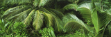 Palm Fronds and Green Vegetation, Seychelles Photographic Print by  Panoramic Images