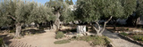 Probable Site of the Garden of Gethsemane, Mount of Olives, All Nations Church, Israel, Jerusalem Photographic Print by  Panoramic Images
