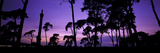 Silhouette of Elveden War Memorial and Scots Pines at Sunset, A11, Elveden, Suffolk, England Photographic Print by  Panoramic Images