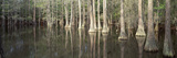Reflection of Trees in a Lake, Tallahassee, Florida, USA Photographic Print by  Panoramic Images