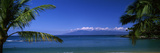 Palm Trees on the Beach, Kapalua Beach, Molokai, Maui, Hawaii, USA Photographic Print by  Panoramic Images