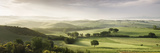 Trees in a Field, San Quirico D'Orcia, Val D'Orcia, Siena Province, Tuscany, Italy Photographic Print by  Panoramic Images