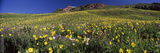 Wildflowers in a Field, West Maroon Pass, Crested Butte, Gunnison County, Colorado, USA Photographic Print by  Panoramic Images