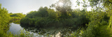 Swamp in a Forest, Ted Ellis Nature Reserve, Norfolk Broads, Norfolk, England Photographic Print by  Panoramic Images