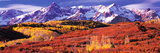 Forest in Autumn with Snow Covered Mountains in the Background, Telluride, San Miguel County, Co... Photographic Print by  Panoramic Images
