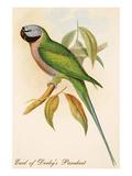 Earl of Derby's Parakeet Print by John Gould