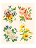Four Flower Collections Posters