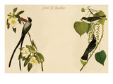Forked Tail Flycatcher Poster by John James Audubon