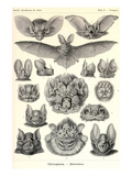 Bats Art by Ernst Haeckel