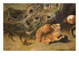 Squirrel Detail from Peacocks Prints by Melchior d'Hondecoeter