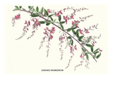 Japanes Desmodium Poster von Louis Van Houtte