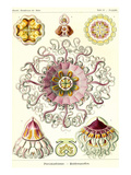 Jelly Fish Poster av Ernst Haeckel