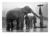 Elephant Turns Traffic Stop Sign in Intersection of Streets in the Nation's Capitol. Prints