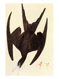 Magnificent Frigate Bird Art by John James Audubon