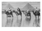 Camels with Native Riders on Board Stand in Reflective Floodwaters Prints
