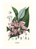 Gesnera Kunstdruck von Louis Van Houtte