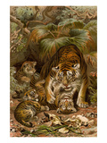 Tiger with Cubs Posters by F.W. Kuhnert