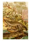 Nile Crocodile Plakaty autor F.W. Kuhnert