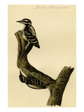 Hairy Woodpecker Poster by John James Audubon